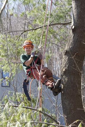 tree pruning northern vermont